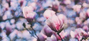 Frühlingscocktails