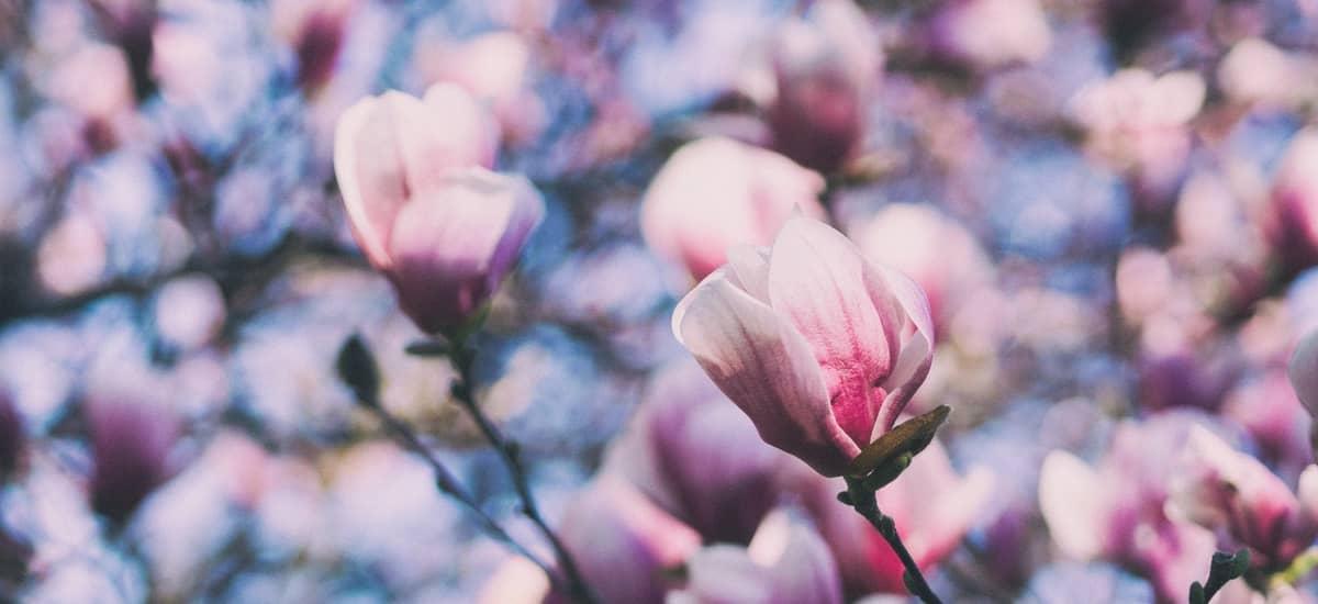 Frühlingscocktails – cremige und sahnige Cocktails