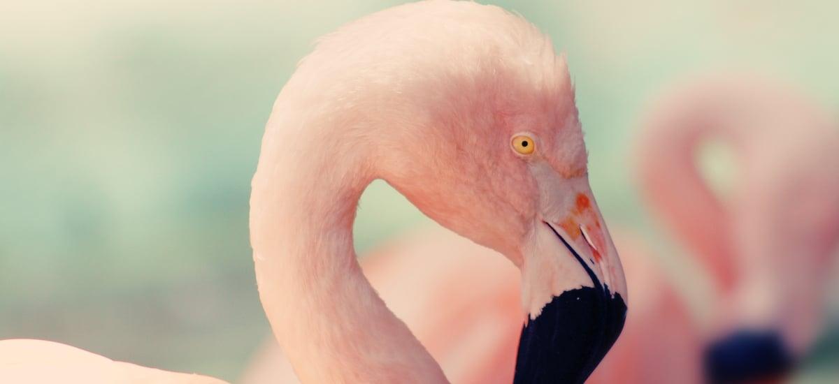 Pink Flamingo Cocktail – original Rezept mit Gin